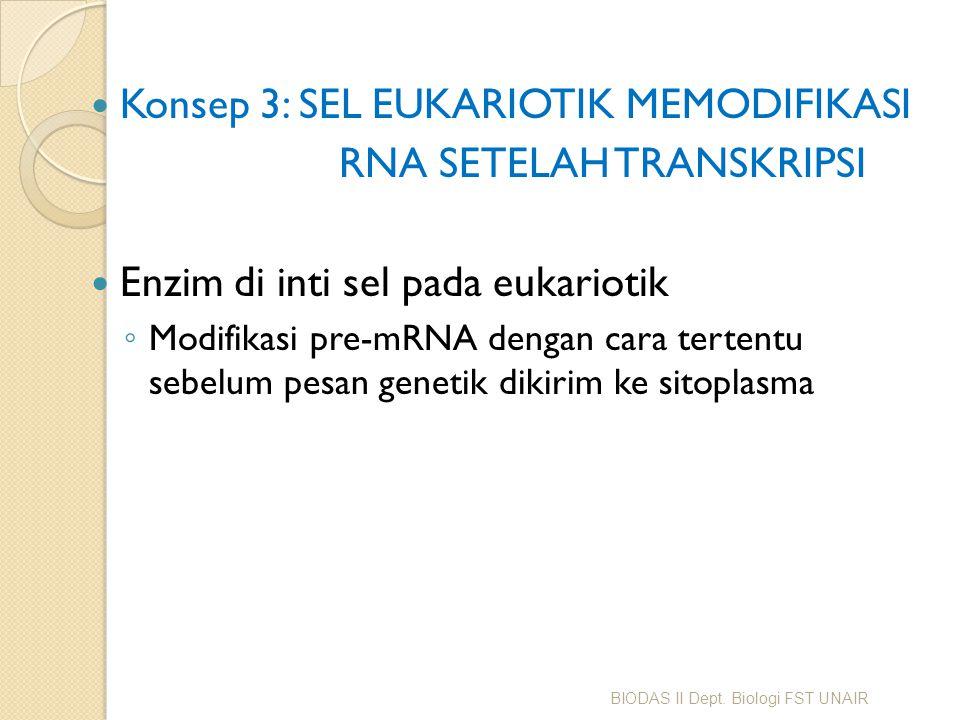 Konsep 3: SEL EUKARIOTIK MEMODIFIKASI RNA SETELAH TRANSKRIPSI