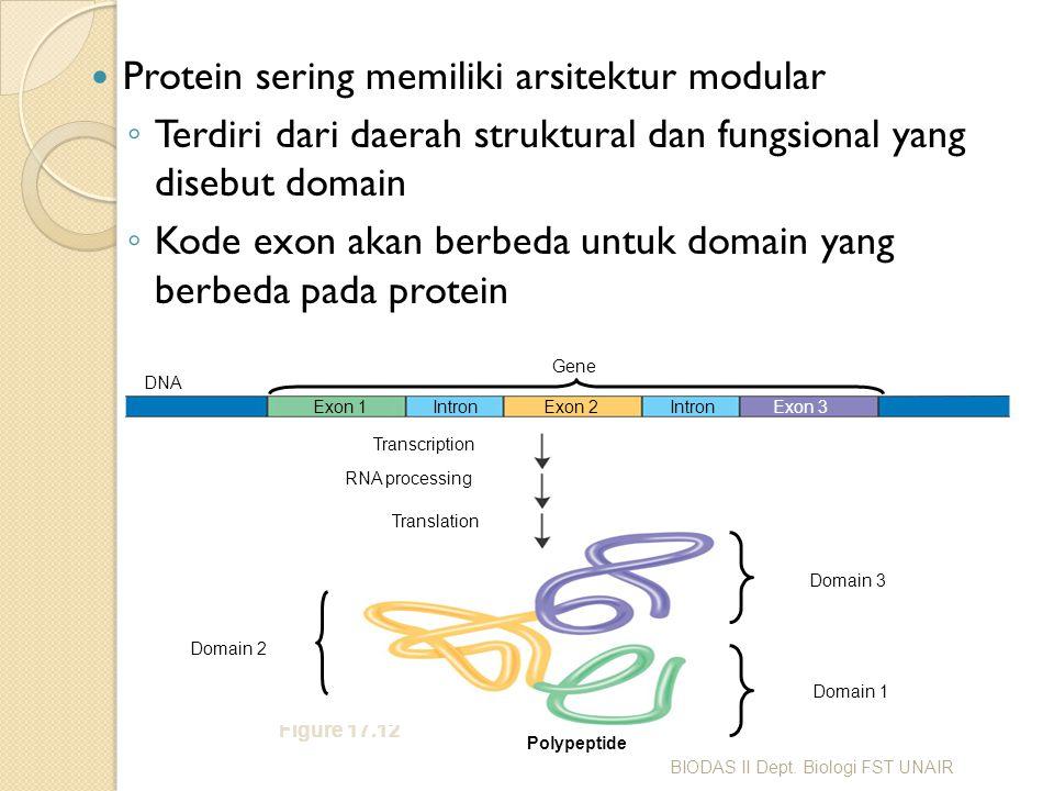 Protein sering memiliki arsitektur modular