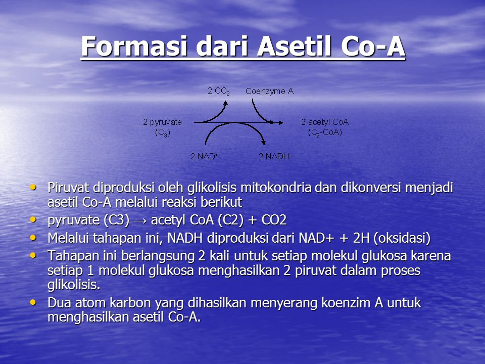 Formasi dari Asetil Co-A