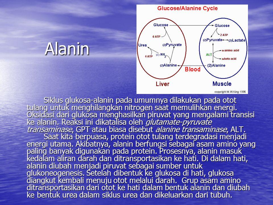 Alanin