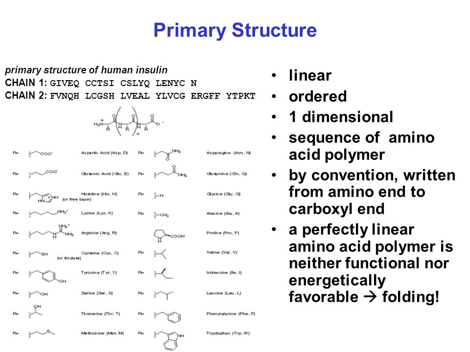 Primary Structure linear ordered 1 dimensional