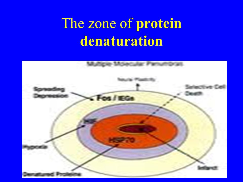 The zone of protein denaturation