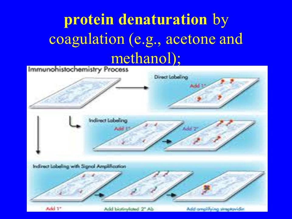 protein denaturation by coagulation (e.g., acetone and methanol);
