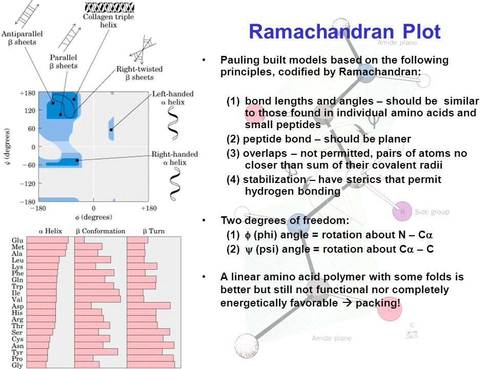 Ramachandran Plot Pauling built models based on the following principles, codified by Ramachandran: