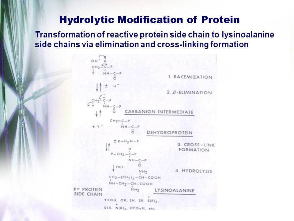 Hydrolytic Modification of Protein