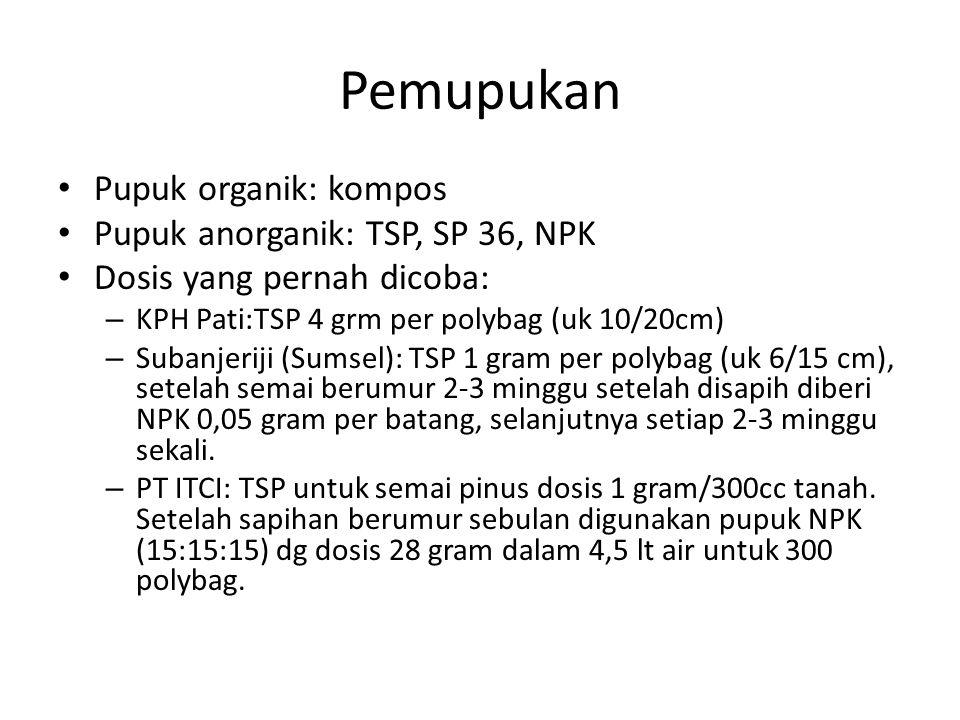Pemupukan Pupuk organik: kompos Pupuk anorganik: TSP, SP 36, NPK