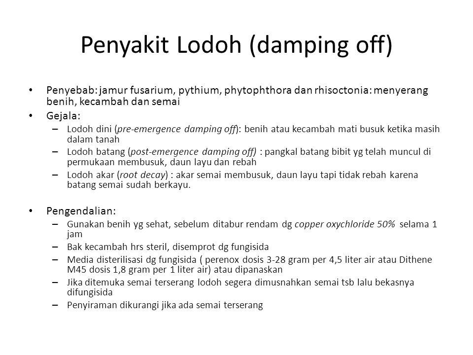 Penyakit Lodoh (damping off)