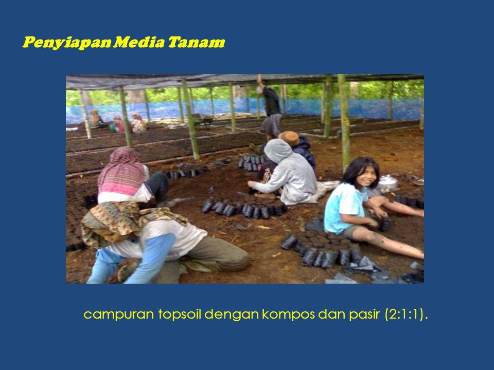Penyiapan Media Tanam campuran topsoil dengan kompos dan pasir (2:1:1).