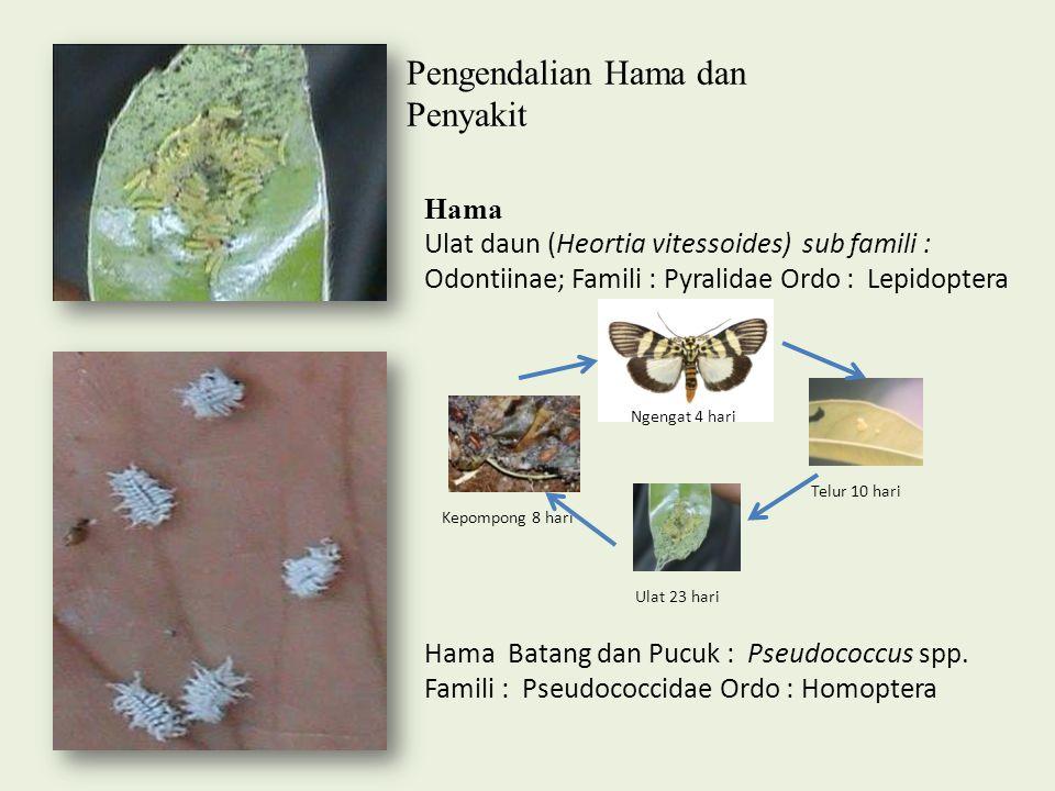 Pengendalian Hama dan Penyakit