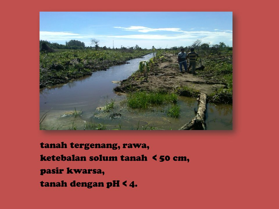 tanah tergenang, rawa, ketebalan solum tanah < 50 cm, pasir kwarsa, tanah dengan pH < 4.