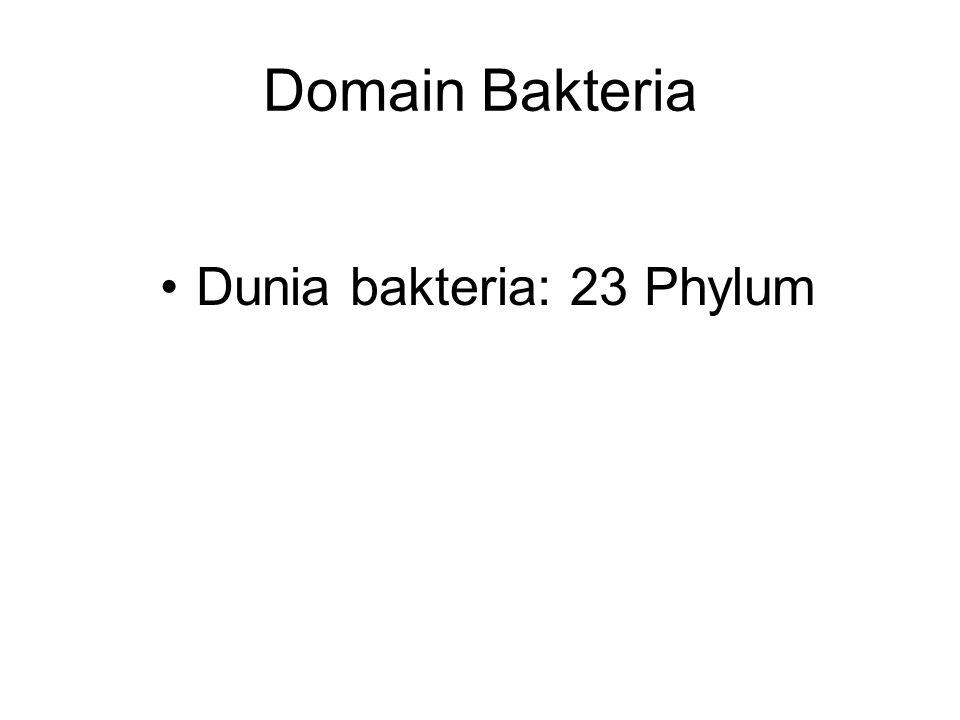 Dunia bakteria: 23 Phylum