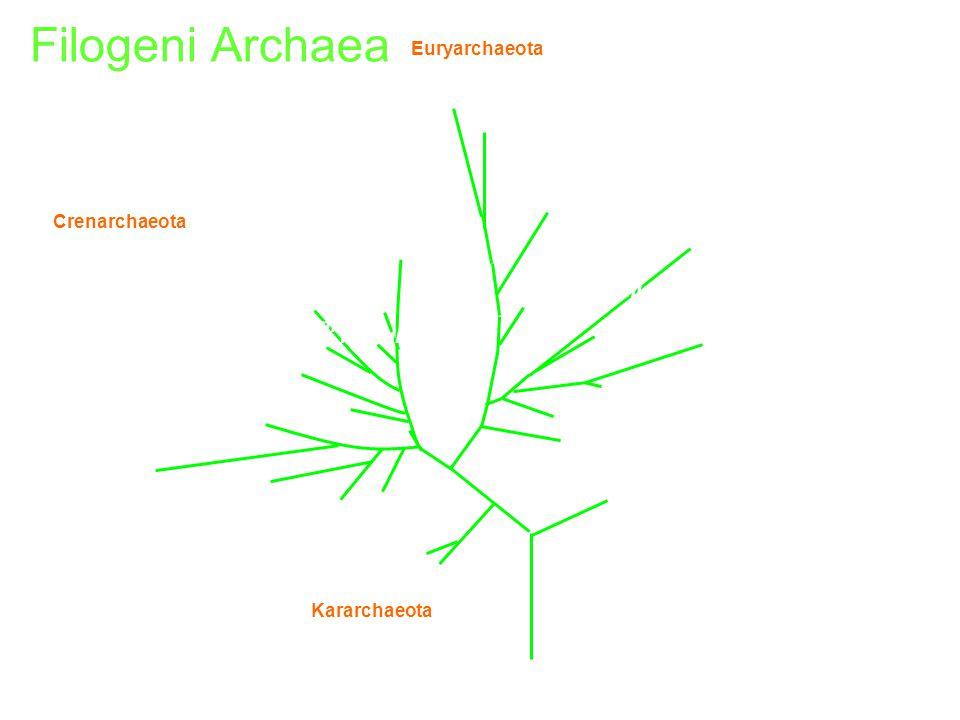 Methanococcus vannielii Methanococcus jannaschii