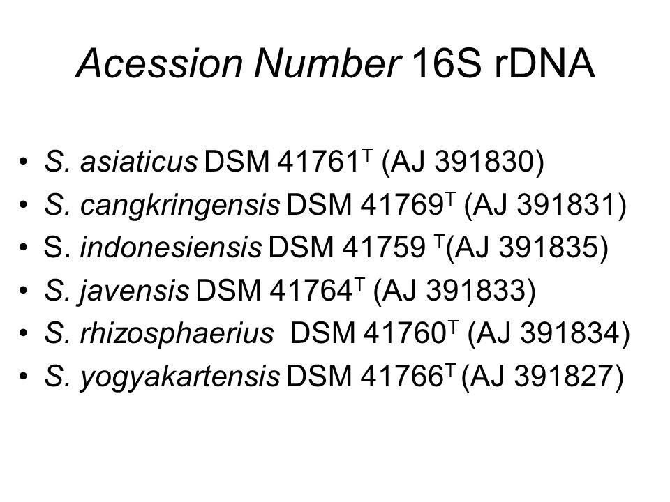 Acession Number 16S rDNA S. asiaticus DSM 41761T (AJ 391830)