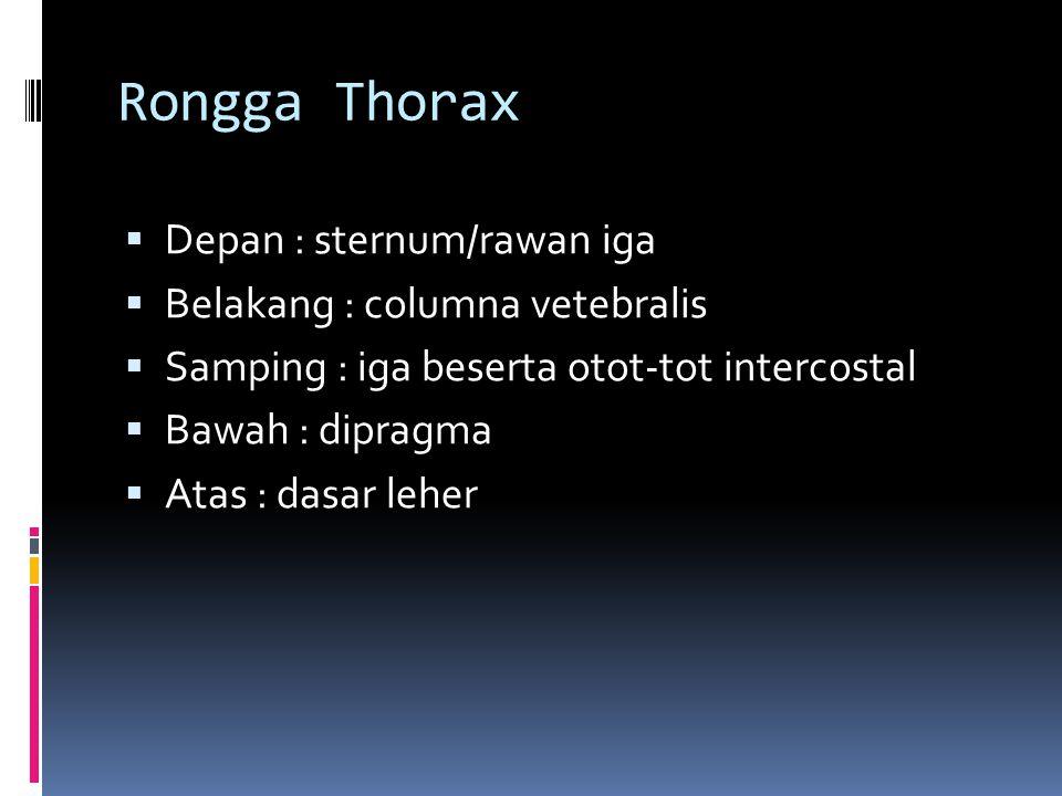 Rongga Thorax Depan : sternum/rawan iga Belakang : columna vetebralis