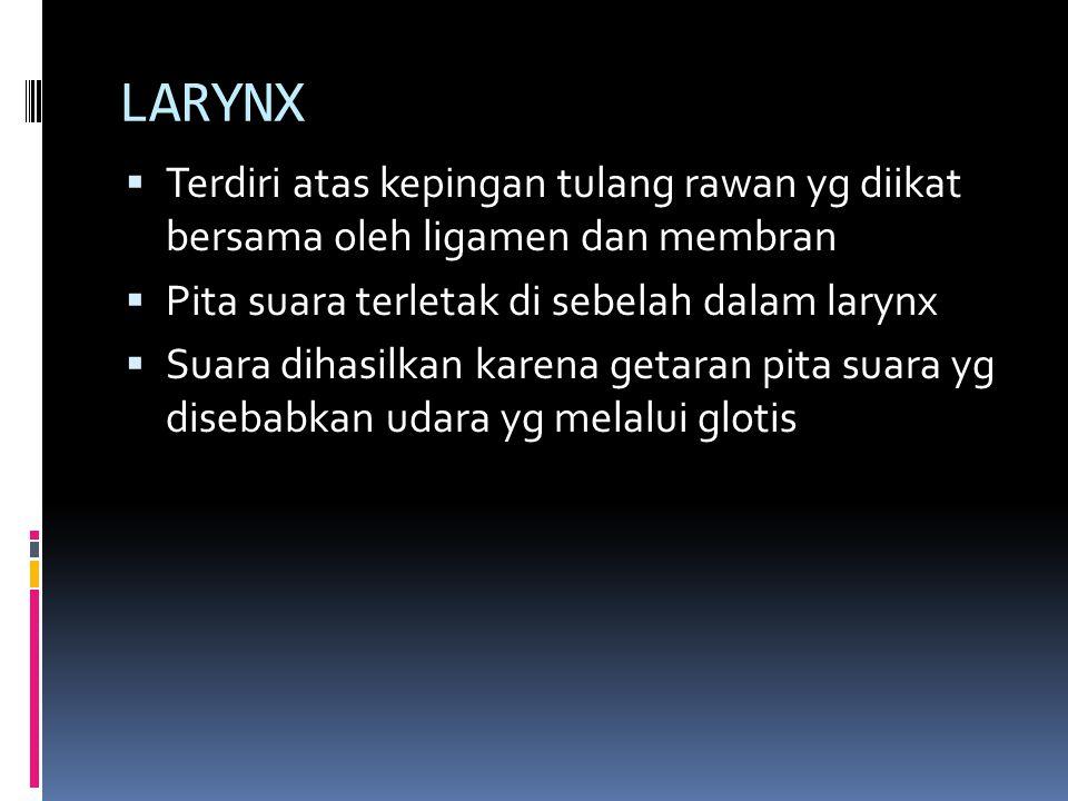 LARYNX Terdiri atas kepingan tulang rawan yg diikat bersama oleh ligamen dan membran. Pita suara terletak di sebelah dalam larynx.