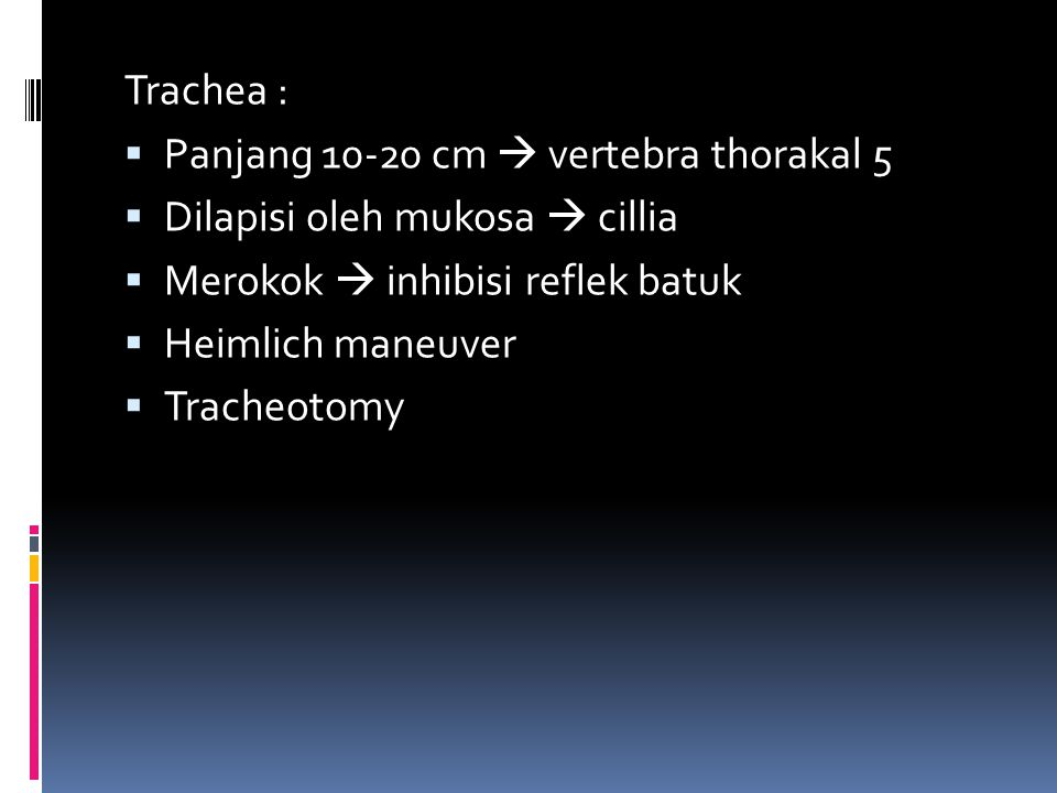 Trachea : Panjang 10-20 cm  vertebra thorakal 5. Dilapisi oleh mukosa  cillia. Merokok  inhibisi reflek batuk.