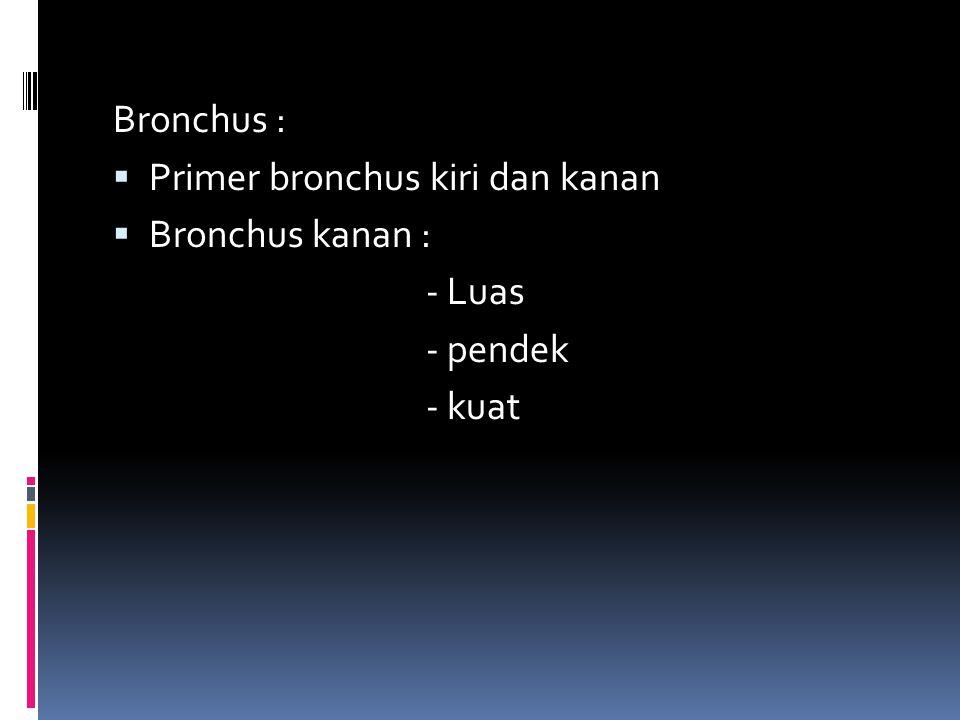 Bronchus : Primer bronchus kiri dan kanan Bronchus kanan : - Luas - pendek - kuat