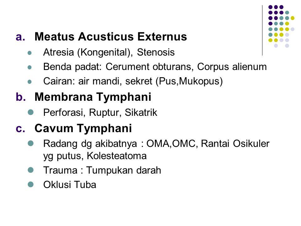 Meatus Acusticus Externus