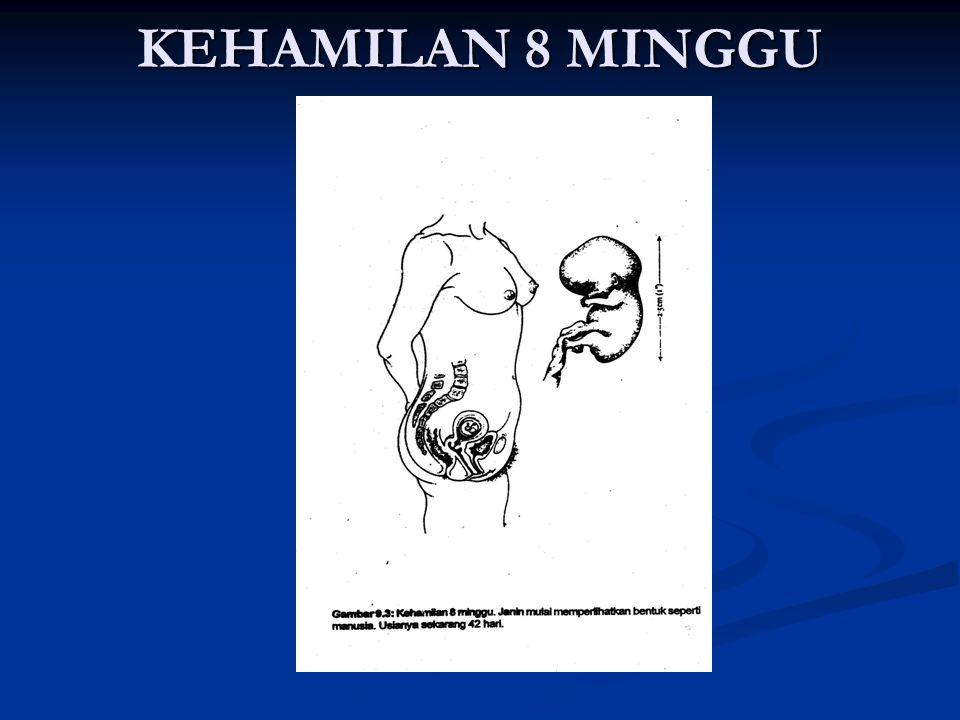 KEHAMILAN 8 MINGGU