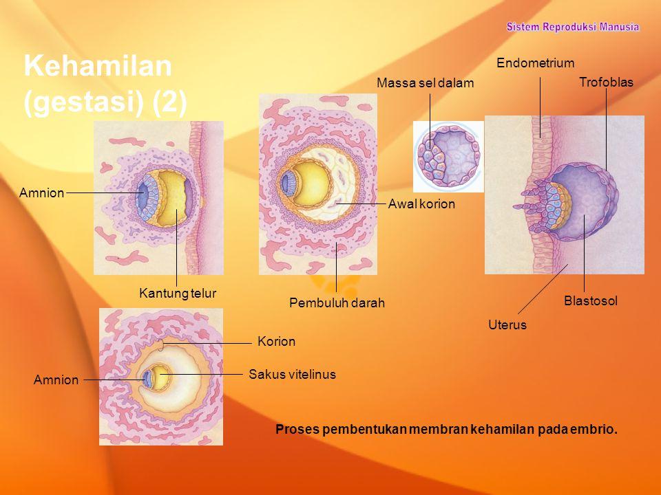 Proses pembentukan membran kehamilan pada embrio.