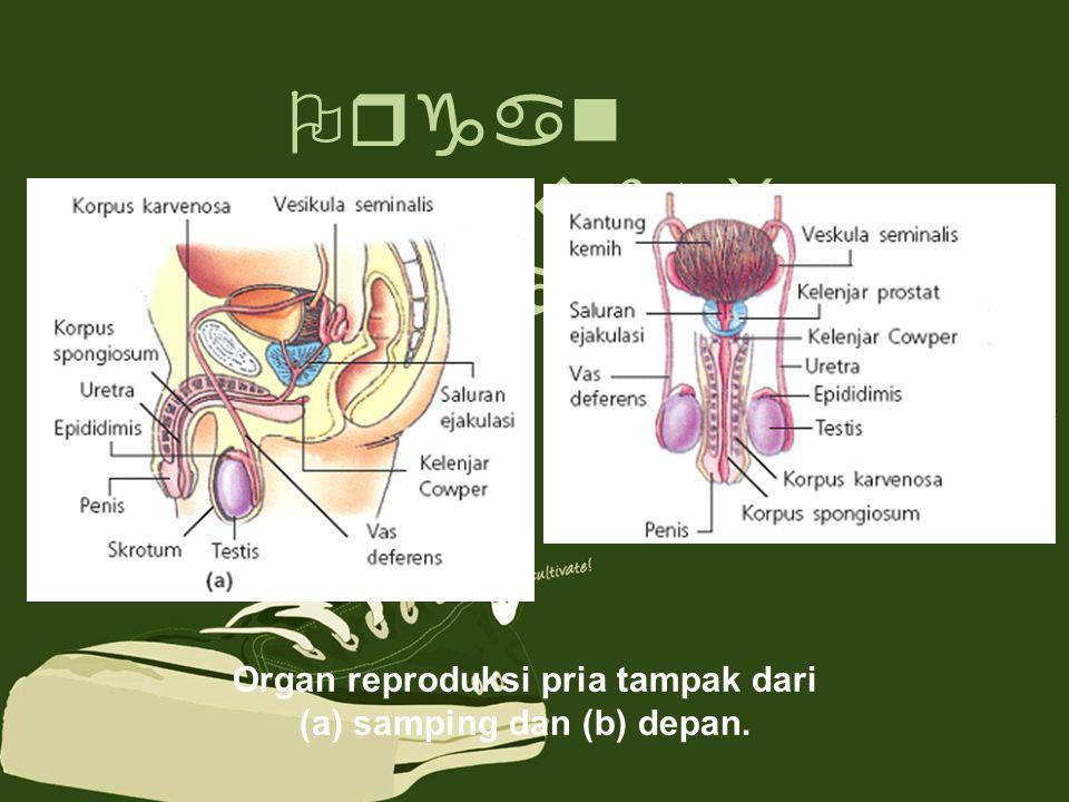 Organ reproduksi dalam