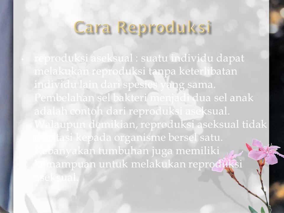 Cara Reproduksi