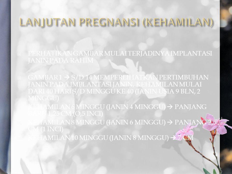 LANJUTAN PREGNANSI (KEHAMILAN)