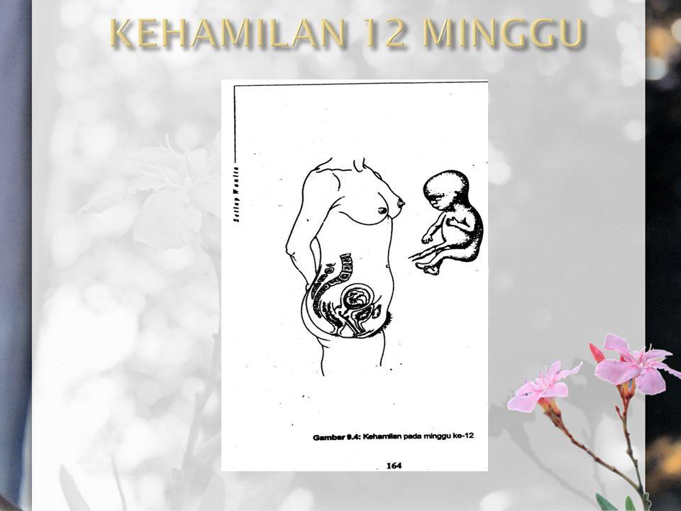 KEHAMILAN 12 MINGGU
