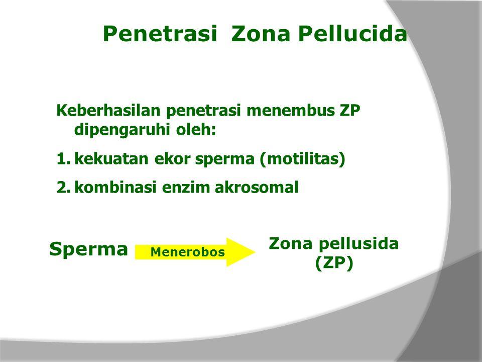 Penetrasi Zona Pellucida