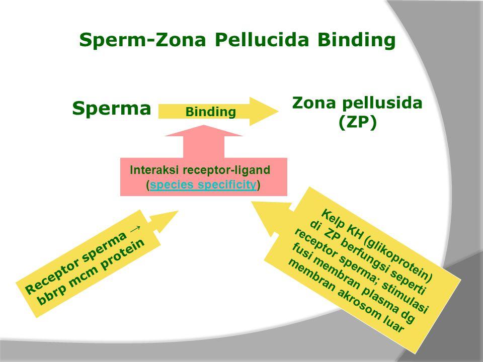Sperm-Zona Pellucida Binding