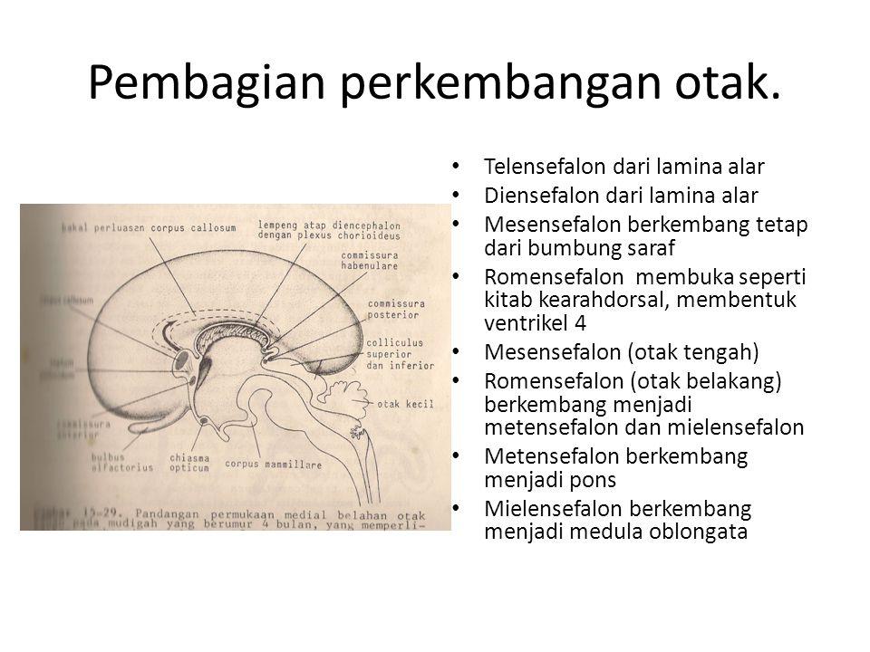Pembagian perkembangan otak.