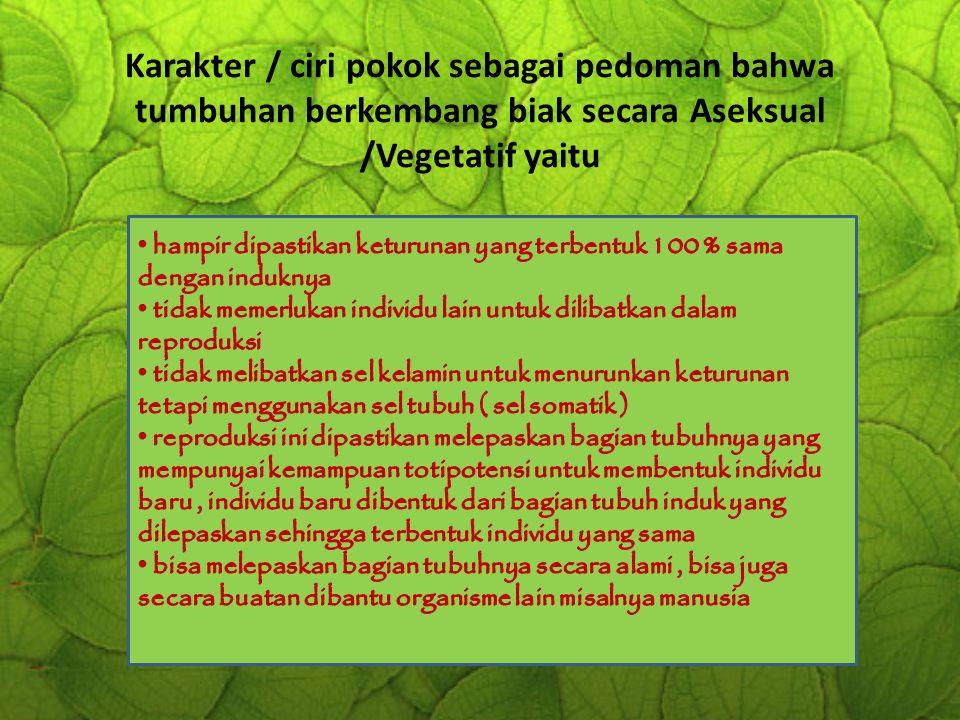 Karakter / ciri pokok sebagai pedoman bahwa tumbuhan berkembang biak secara Aseksual /Vegetatif yaitu