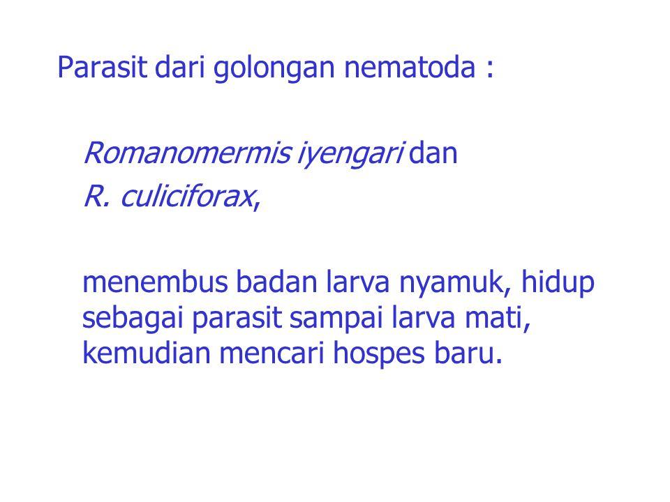 Parasit dari golongan nematoda : Romanomermis iyengari dan R