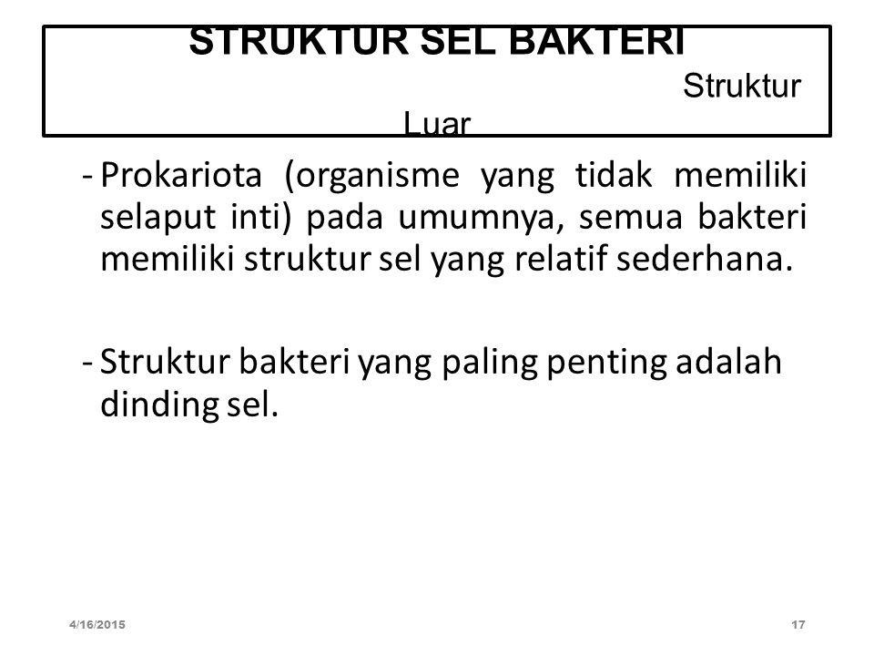 STRUKTUR SEL BAKTERI Struktur Luar