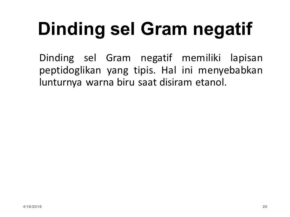 Dinding sel Gram negatif