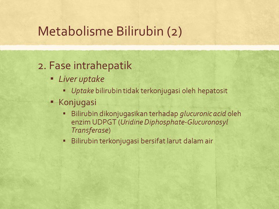 Metabolisme Bilirubin (2)