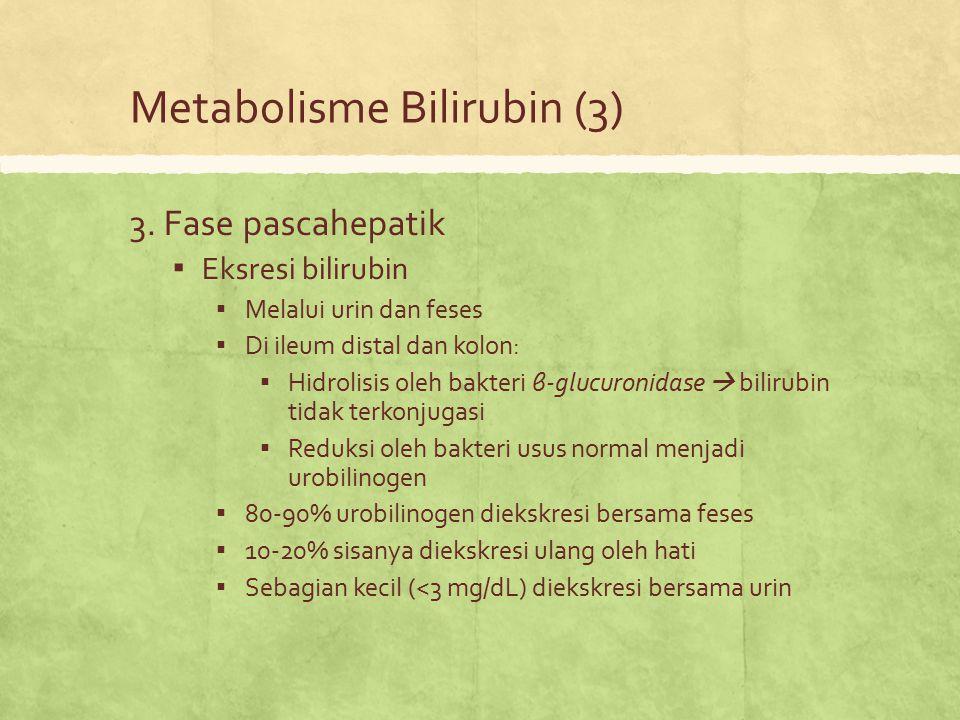 Metabolisme Bilirubin (3)