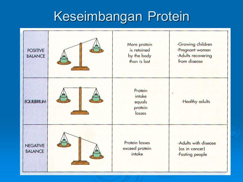 Keseimbangan Protein