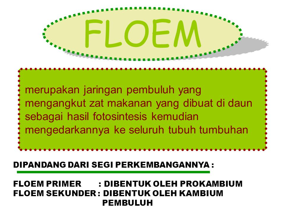 FLOEM merupakan jaringan pembuluh yang