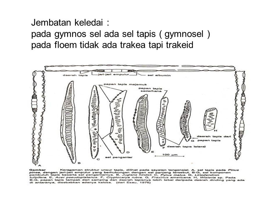 Jembatan keledai : pada gymnos sel ada sel tapis ( gymnosel ) pada floem tidak ada trakea tapi trakeid