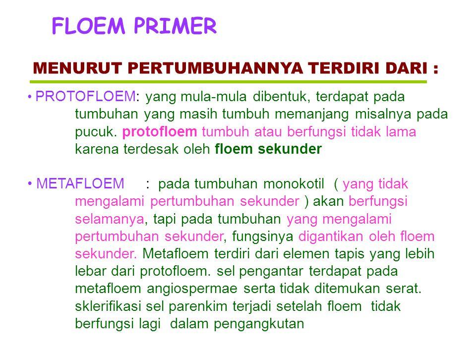 FLOEM PRIMER MENURUT PERTUMBUHANNYA TERDIRI DARI :