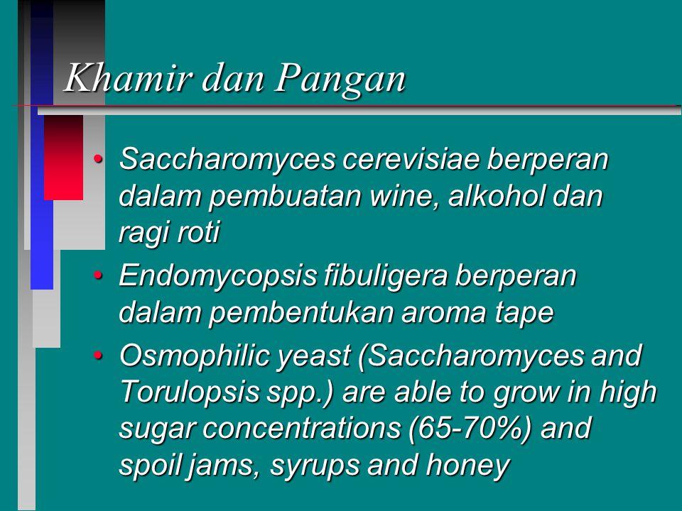 Khamir dan Pangan Saccharomyces cerevisiae berperan dalam pembuatan wine, alkohol dan ragi roti.