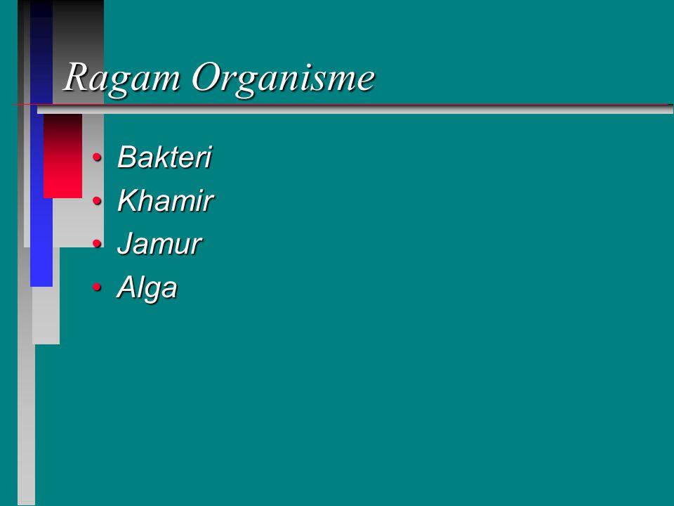 Ragam Organisme Bakteri Khamir Jamur Alga