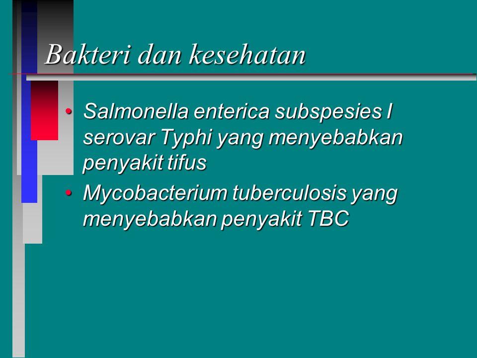 Bakteri dan kesehatan Salmonella enterica subspesies I serovar Typhi yang menyebabkan penyakit tifus.