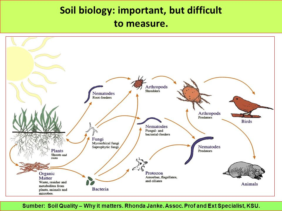 Soil biology: important, but difficult to measure.