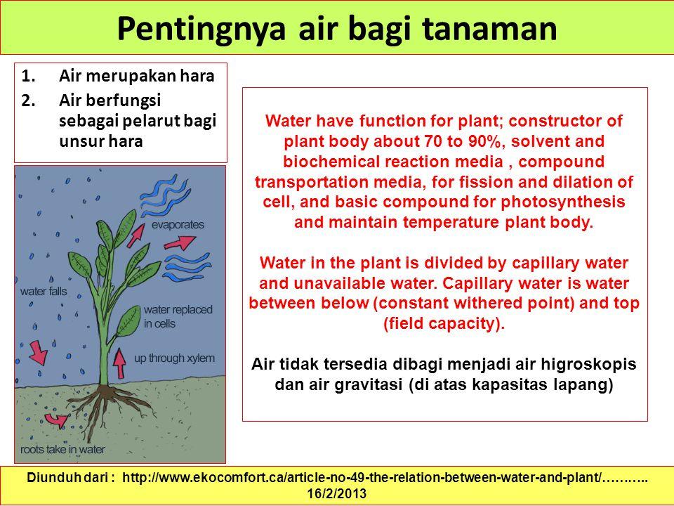 Pentingnya air bagi tanaman