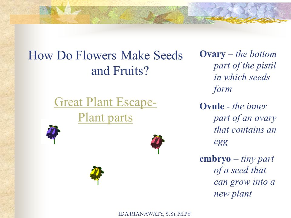 How Do Flowers Make Seeds and Fruits Great Plant Escape- Plant parts