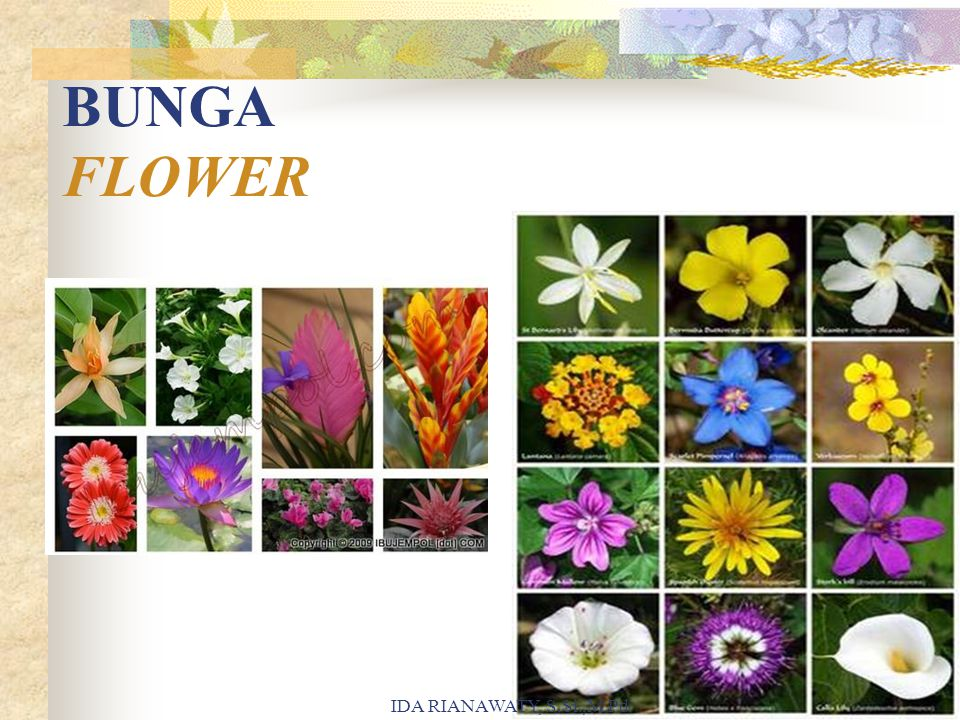 BUNGA FLOWER IDA RIANAWATY, S.Si.,M.Pd.