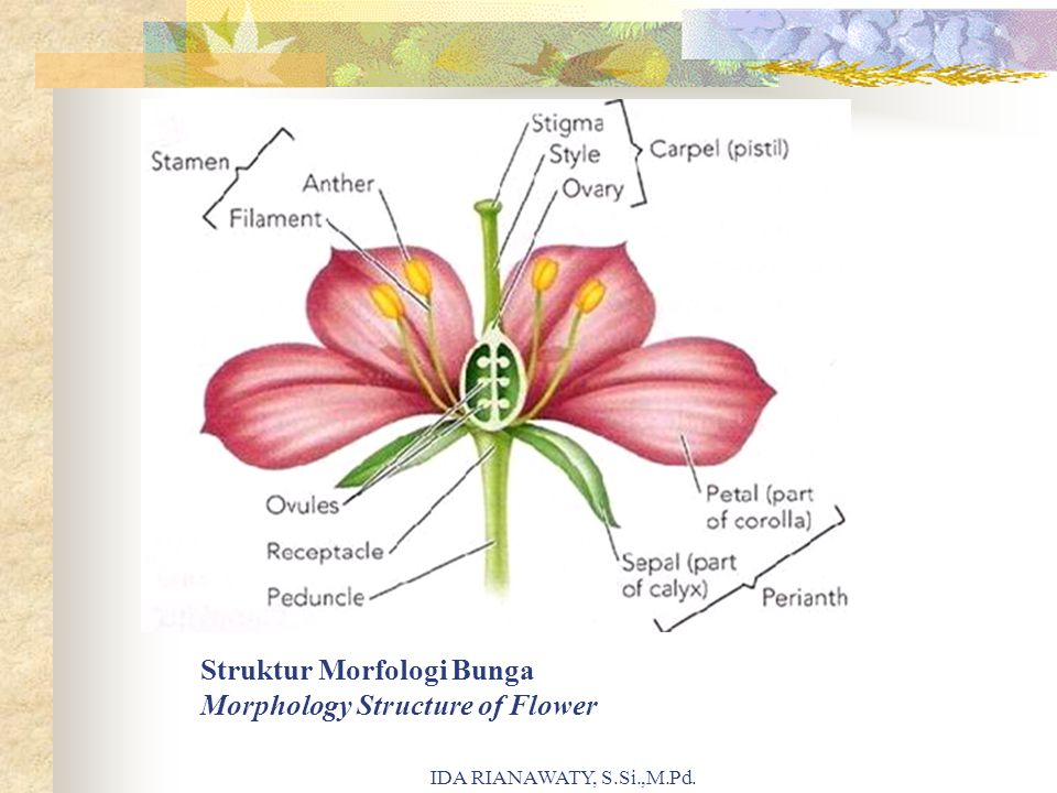 Struktur Morfologi Bunga Morphology Structure of Flower