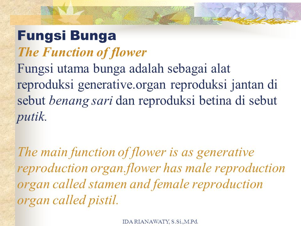 Fungsi Bunga The Function of flower Fungsi utama bunga adalah sebagai alat reproduksi generative.organ reproduksi jantan di sebut benang sari dan reproduksi betina di sebut putik. The main function of flower is as generative reproduction organ.flower has male reproduction organ called stamen and female reproduction organ called pistil.